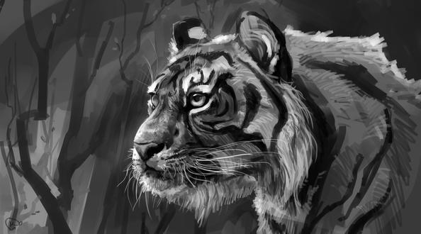Обои Черно-белый портрет тигра, by AlaxendrA