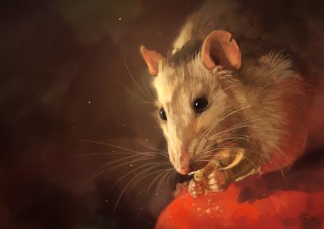 Обои Портрет крысы с печеньем, by AlaxendrA