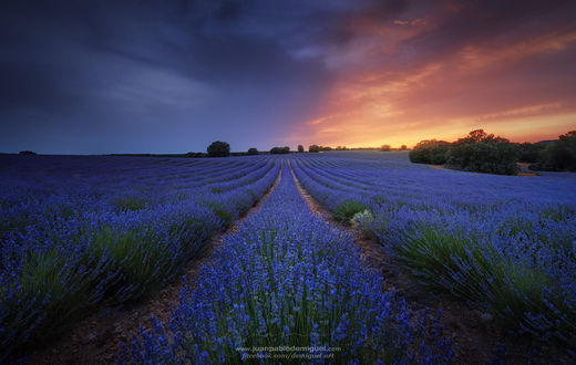 Обои Лавандовое поле на закате, фотограф Juan Pablo de Miguel