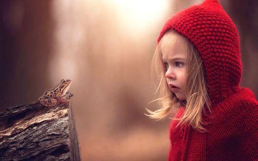 Обои Девочка в красном капюшоне удивленно смотрит на лягушку, сидящую на пеньке