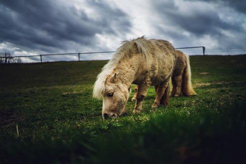 Обои Белый пони пасется на лугу, фотограф Stefan Petershofer