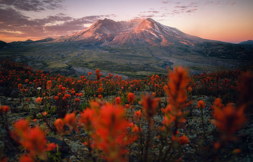 Обои Цветущая долина перед горами, фотограф Nathaniel Merz