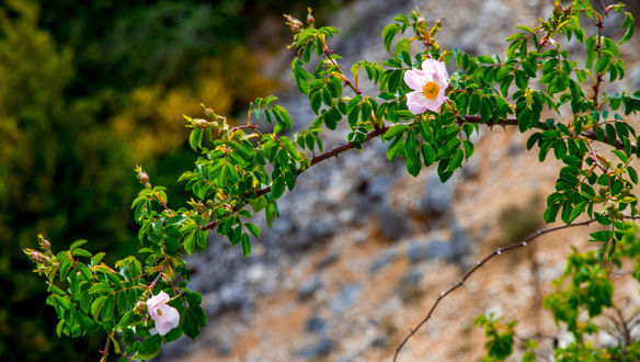 Обои Цветущая ветка на фоне природы, фотограф Elena