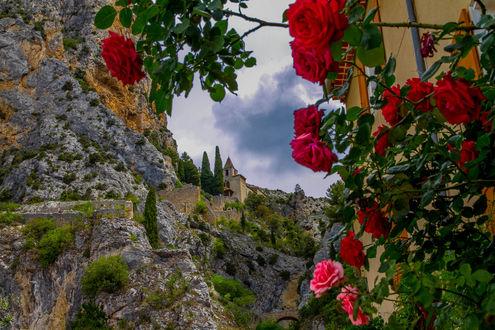 Обои Цветущая ветка красных роз на фоне природы, фотограф Elena