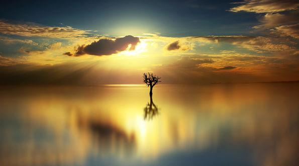 Обои Одинокое дерево в воде, фотограф Anna Ovatta