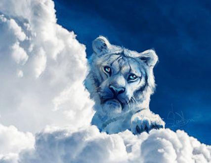 Обои Тигр в облаках, by SalamanDra-S