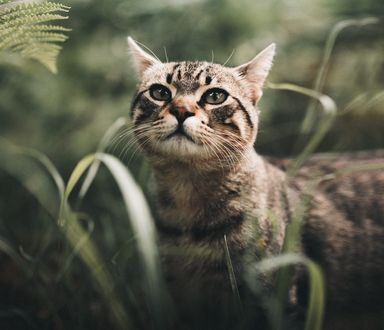 Обои Серый кот в траве, фотограф Nacho Zаitsev