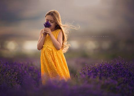 Обои Девочка, стоящая в лавандовом поле вдыхает аромат цветов, by Lisa Holloway