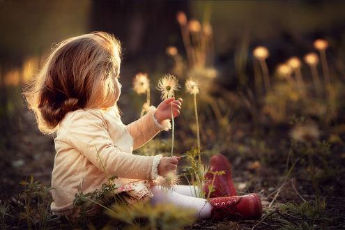 Обои Маленькая девочка сидит на земле рядом с ней цветы, фотограф Марианна Смолина