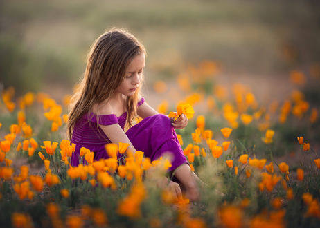 Обои Девочка сидит на цветочном лугу, by Lisa Holloway