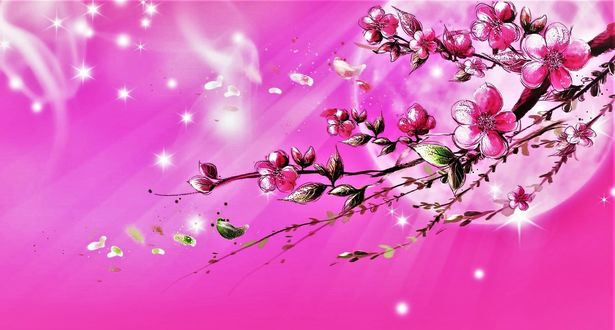 Обои Весенняя цветущая веточка на розовом фоне