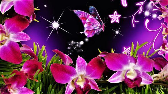 Обои Лиловые орхидеи и бабочка