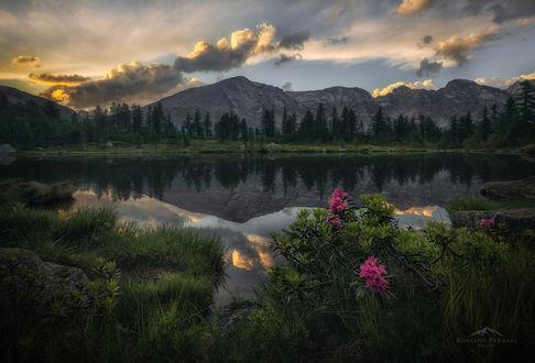Обои Озеро на закате, на переднем плане цветущие розовые цветы родендрона, фотограф Rossano Ferrari