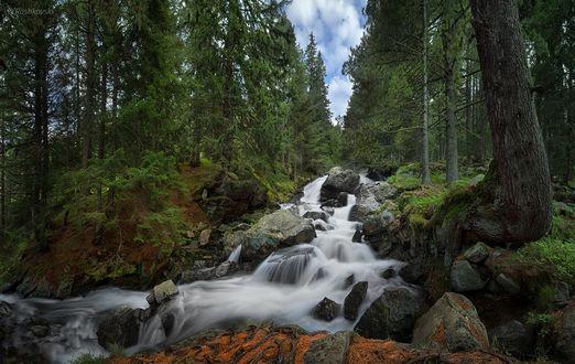Обои Ручей среди камней в лесу