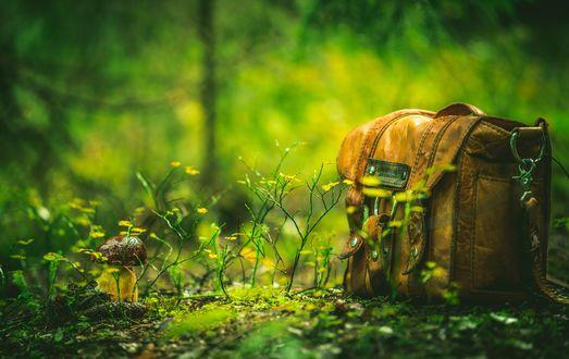 Обои Коричневый портфель лежит на земле, размытый фон