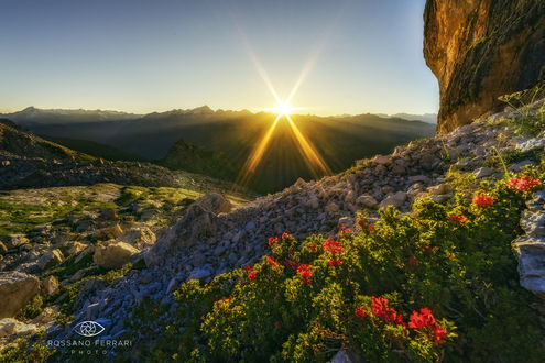 Обои Цветы родендрона на закате, фотограф Rossano Ferrari