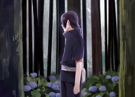 Обои Итачи Учиха / Itachi Uchiha стоит в среди деревьев и цветущей гортензии из аниме Наруто / Naruto, art by Masashi Kishimoto