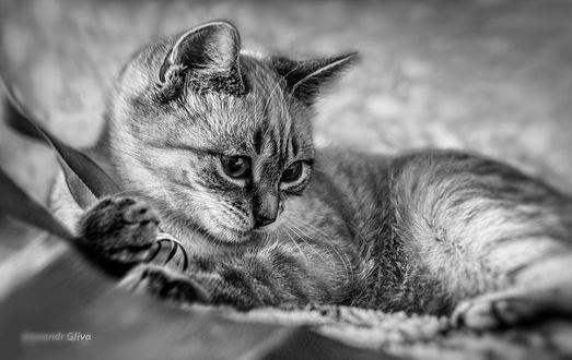 Обои Симпатичный котенок, фотограф Олександр Глива