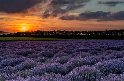 Обои Лавандовое поле на закате, фотограф Svilen Simeonov