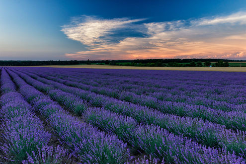 Обои Лавандовое поле под облачным небом, фотограф Svilen Simeonov