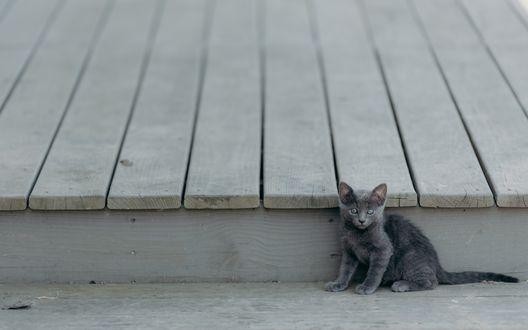 Обои Маленький серый котенок сидит возле деревянного навеса