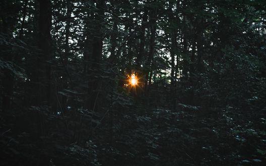 Обои Свет заходящего солнца пробивается сквозь густой лес