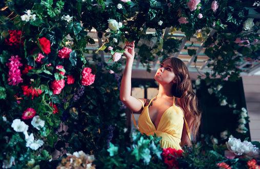 Обои Модель Анастасия Щеглова стоит среди роз, фотограф Ivan Gorokhov