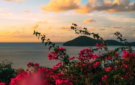 Обои Вид на море под облачным небом через кусты красных цветов на переднем плане, фотограф Oscar Nilsson