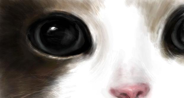 Обои Мордочка котенка с черными глазами