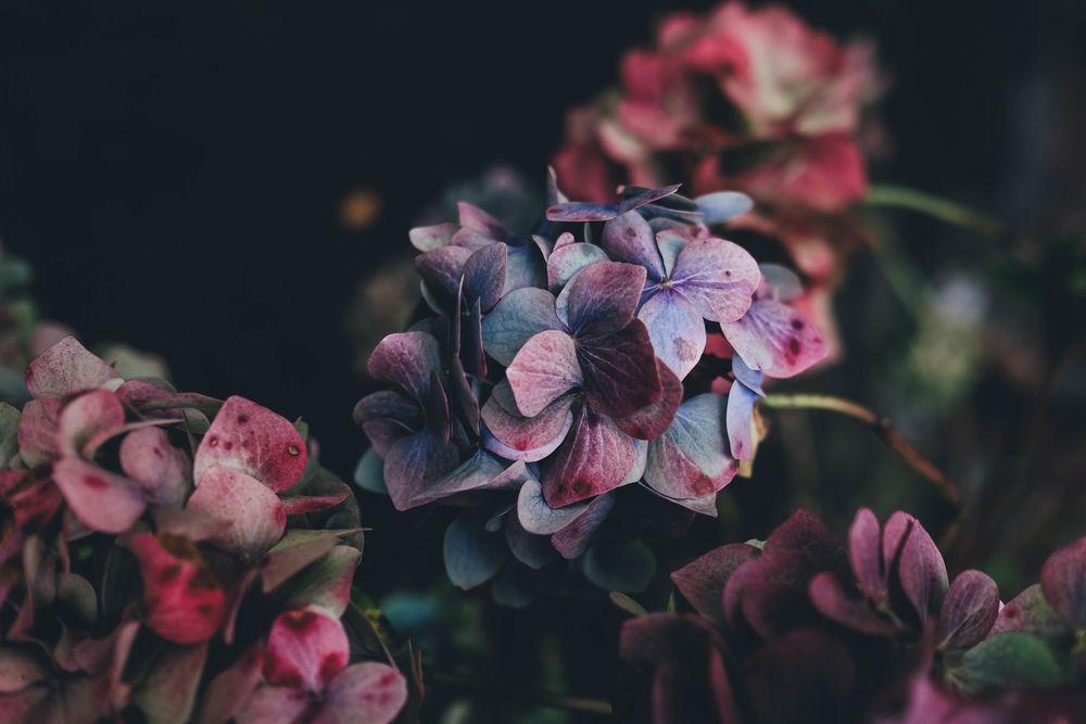 обои на рабочий стол цветы минимализм 6793