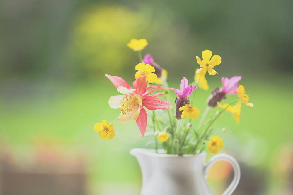 Обои для рабочего стола Букетик цветов в белом кувшине, фотограф Paula W