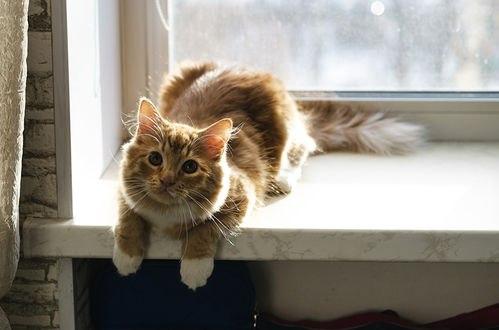 Обои Пушистая кошка лежит на подоконнике
