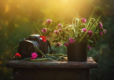 Обои Букетик цветов клевера и фотоаппарат на старом табурете, фотограф Инна Сухова