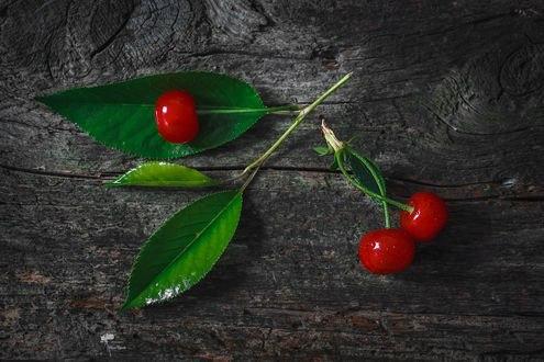 Обои Спелые вишни с листочками, фотограф Инна Сухова