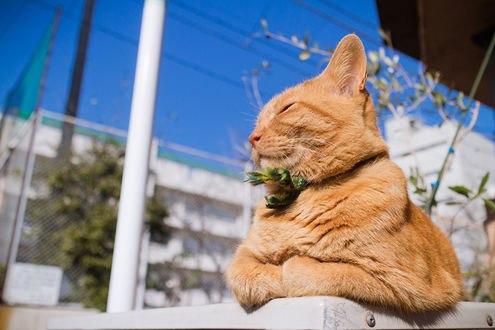 Обои Ленивый рыжий кот загорает на солнышке