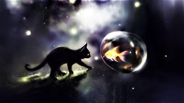 Обои Черная кошка смотрит на золотую рыбку в водяном шаре