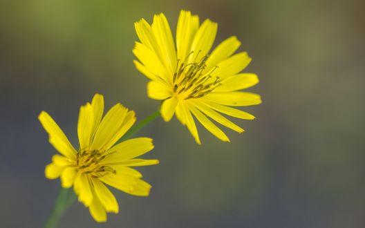 Обои Желтые цветы на размытом фоне