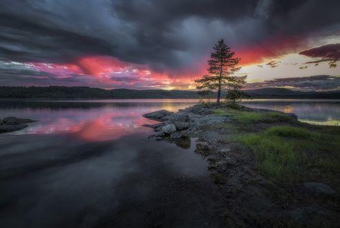 Обои Одинокое дерево на берегу реки