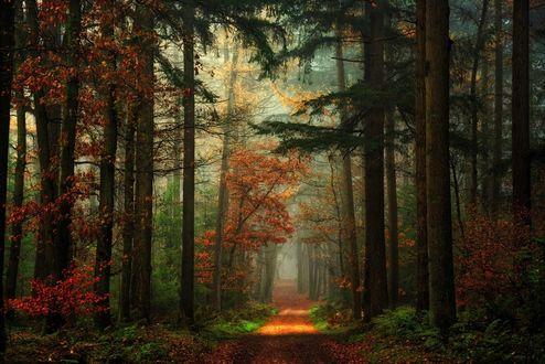 Обои Тропа в смешанном лесу, Germany / Германия, фотограф Lars van de Goor