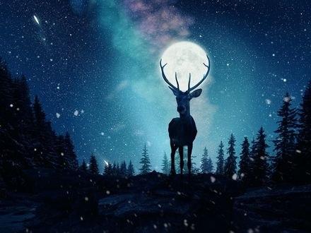 Обои Луна в оленьих рогах, фотограф Caras Ionut