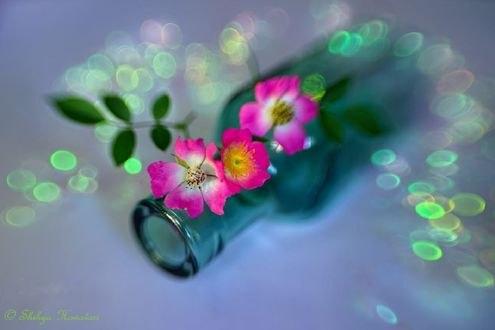 Обои Пузырек и розовые цветы в бликах, фотограф Shihya Kowatari