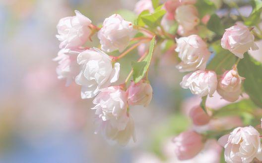 Обои Цветущий куст розовых роз, фотограф Paula W