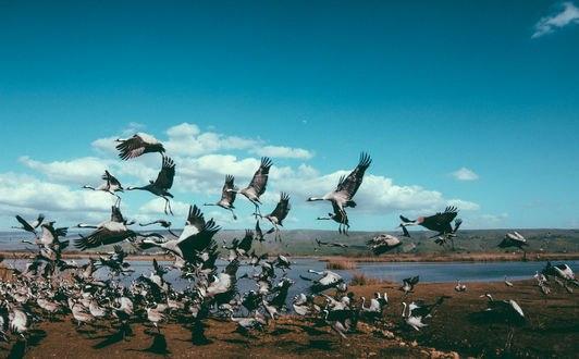 Обои Стая птиц приземлилась на берегу озера