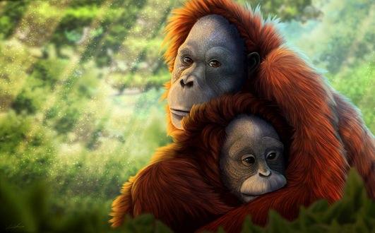 Обои Орангутанг держит в объятиях детеныша орангутанга, by Golphee