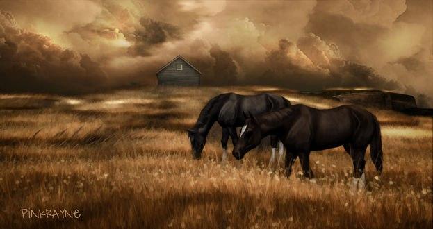Обои Две лошади на природе, by Pink RayneSL