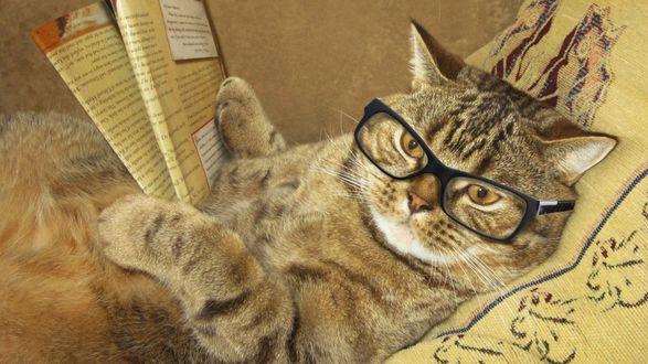 Обои Смешной полосатый кот читает газету в очках, лежа на кровати