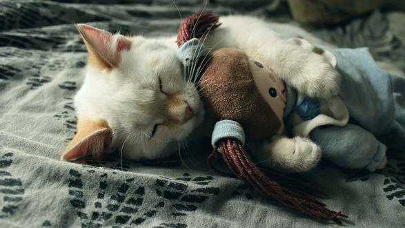 Обои Маленький белый котенок спит в обнимку с мягкой игрушкой