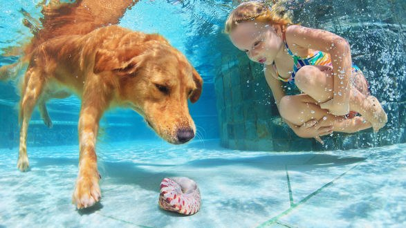 Обои Девочка и рыжая собака на дне бассейна