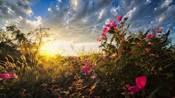 Обои Полевые цветы в лучах заходящего летнего солнца