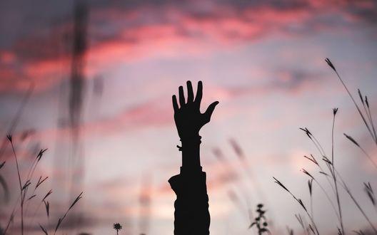 Обои Рука, поднятая вверх к закатному небу